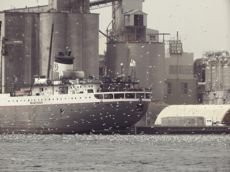 port-boat-gulls